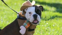 Dog dressed up as a cowboy for Canine Costume Contest at Pumpkin Palooza