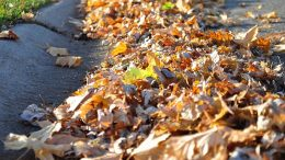 City encourages leaf free' streets