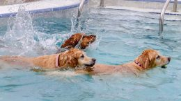 Pooch Plunge at Blackberry Farm
