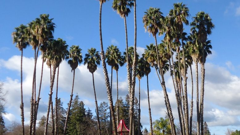 POLL: What is your favorite neighborhood park in Cupertino?
