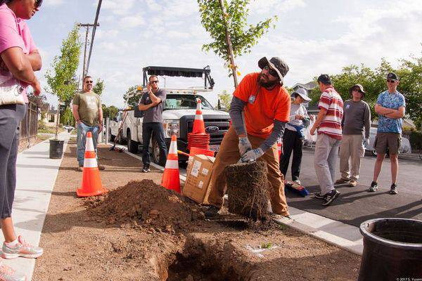 Cupertino named 2017 Tree City USA by Arbor Foundation