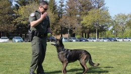 Dutch becomes first full-time K-9 for the West Valley Division